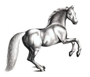 horse drawing animals draw pencil drawings animal step realistic horses easy sketches paintings karakalem resimleri running painting shadows