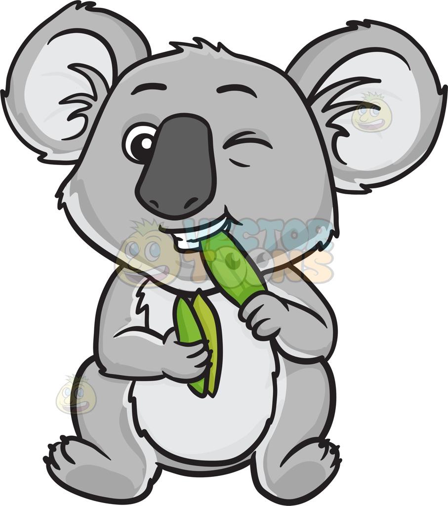medium resolution of 907x1024 a koala bear eating leaves