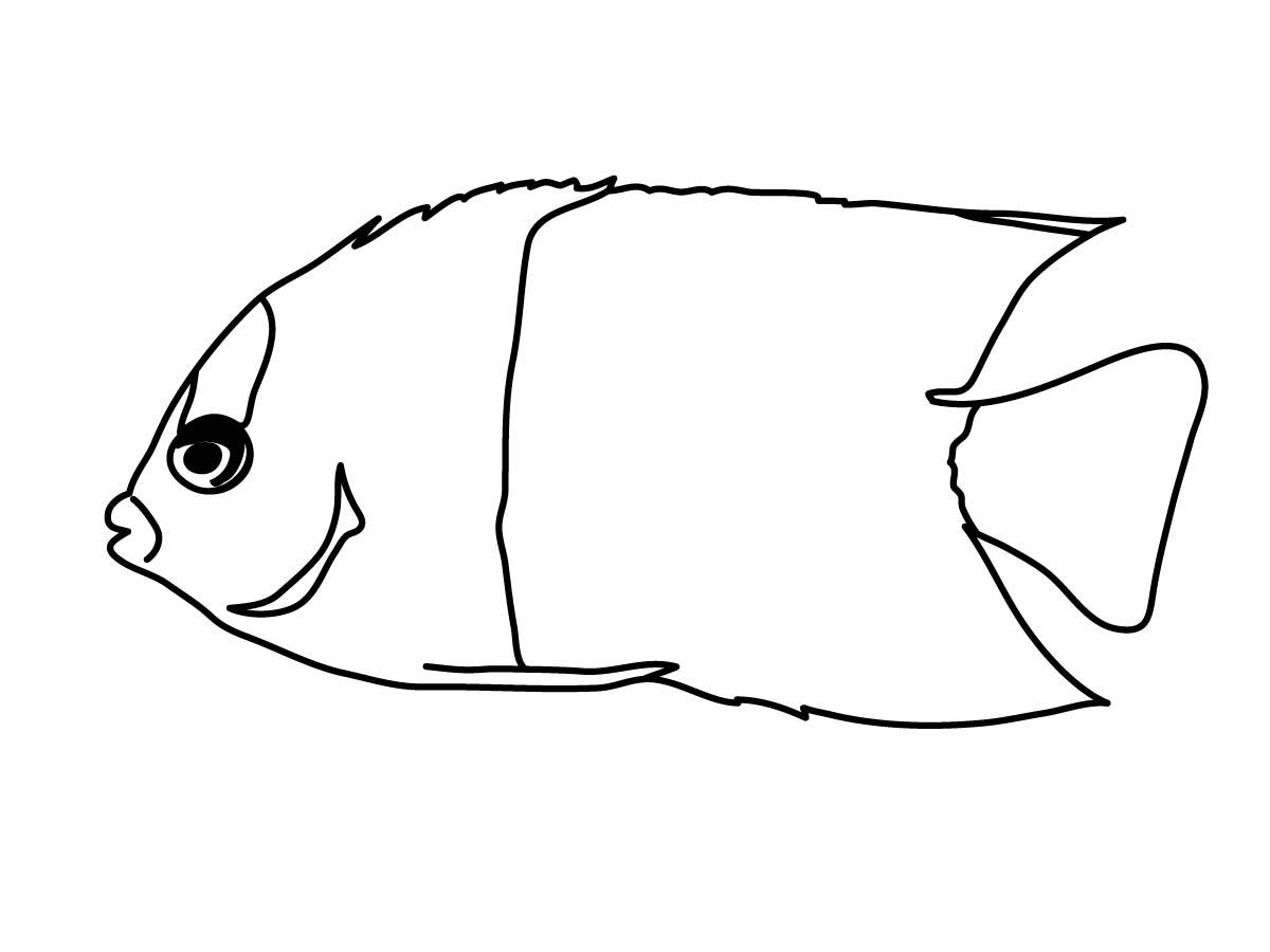 Nemo Black And White