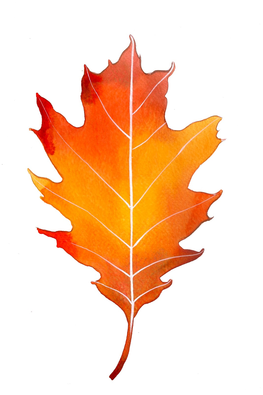 hight resolution of 1069x1600 free oak leaf clipart