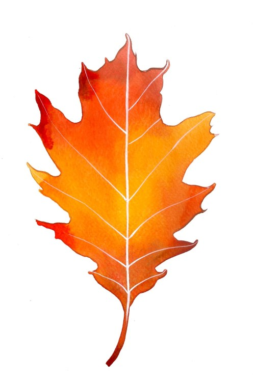 small resolution of 1069x1600 free oak leaf clipart
