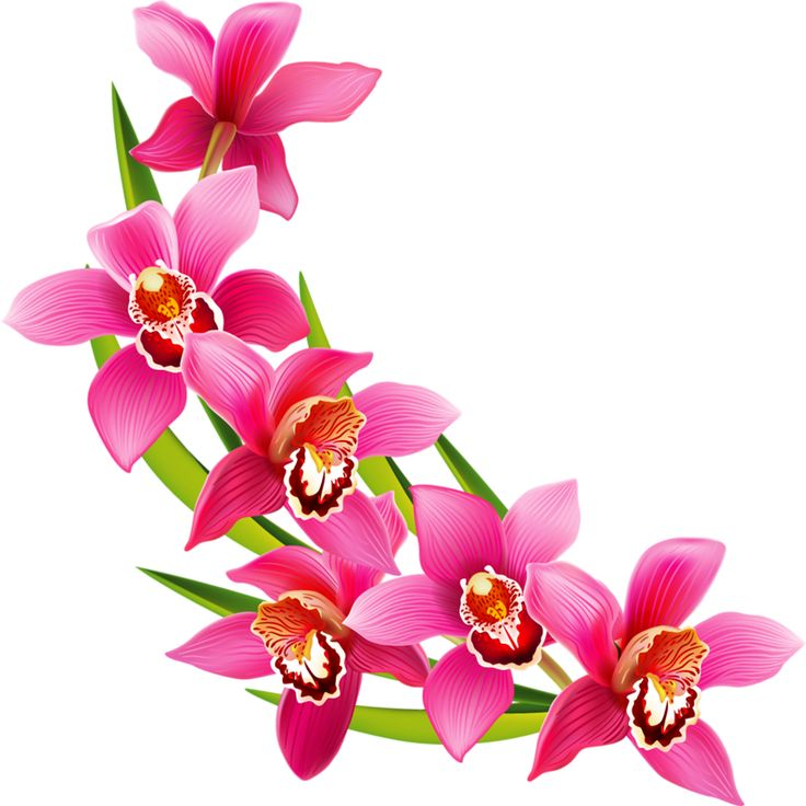 orchid flower clipart free