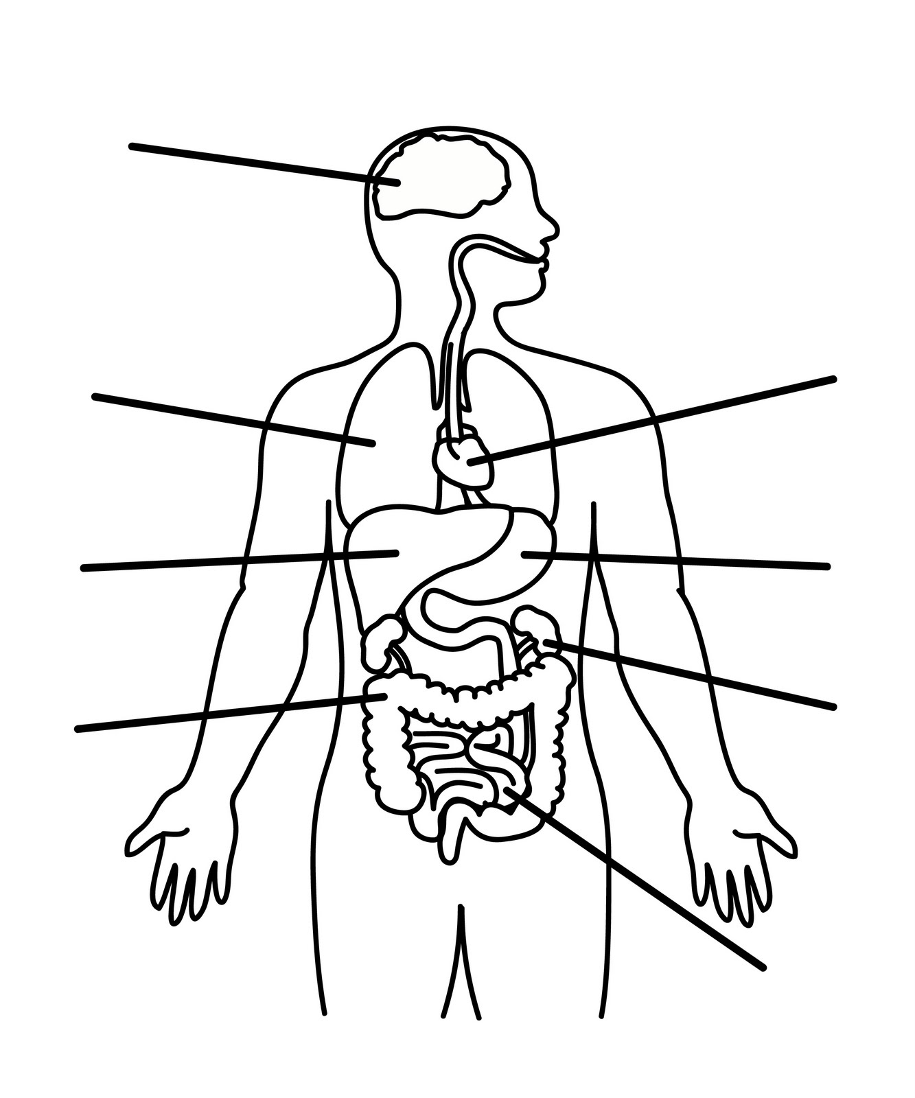 Outline Of A Body