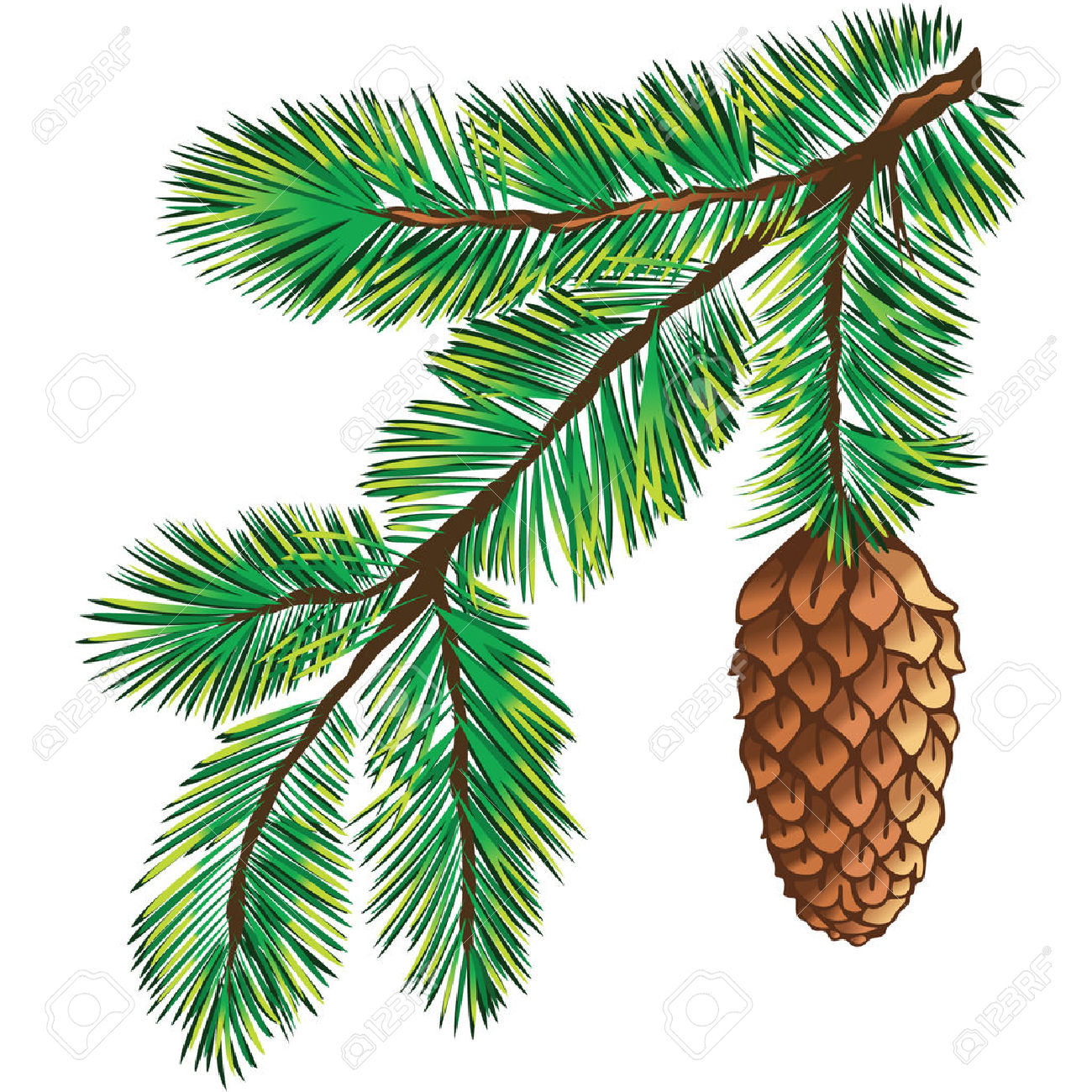 hight resolution of 1300x1300 pine branch clipart