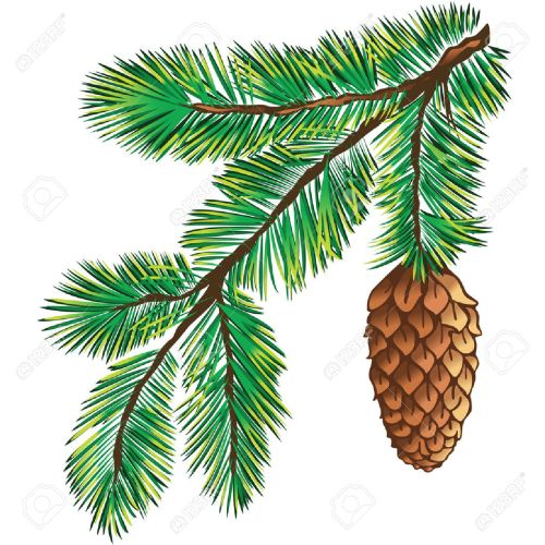 small resolution of 1300x1300 pine branch clipart