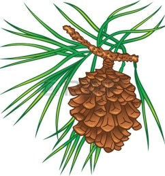 1320x1350 pine clipart pine tree branch [ 1320 x 1350 Pixel ]