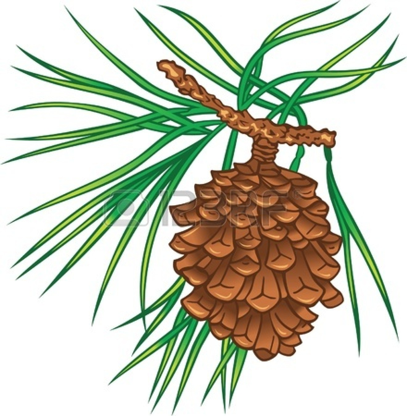 hight resolution of 1320x1350 pine clipart pine tree branch