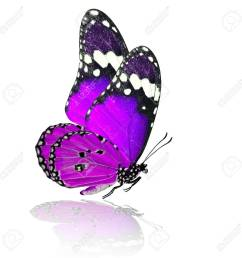1300x1300 purple butterfly stock photos royalty free purple butterfly [ 1300 x 1300 Pixel ]