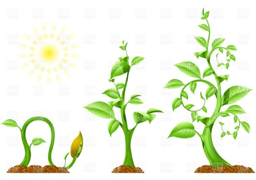 small resolution of 1200x843 plant growth royalty free vector clip art image