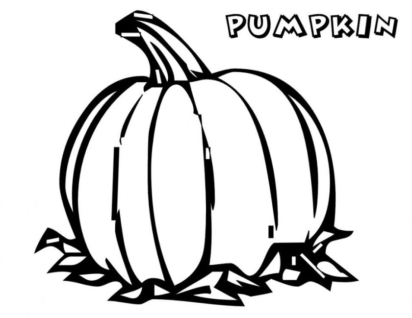 pumpkin patch coloring pages  free download on clipartmag