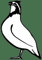 quail bobwhite clipart initiative clipartmag conservation national implementation