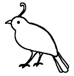 quail clipart clip outline quails flannel boards clipartmag animals manna alphabet paper