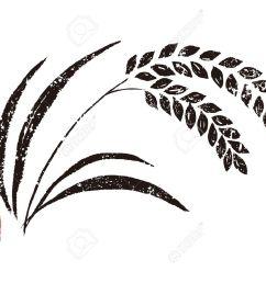 1300x975 rice clipart rice crop [ 1300 x 975 Pixel ]