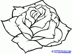 rose simple drawings pencil step drawn clipartmag