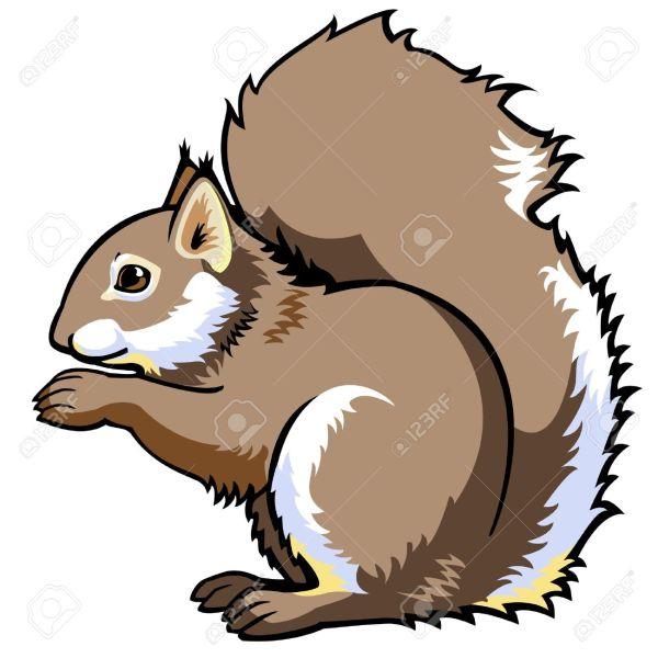 squirrel clipart free