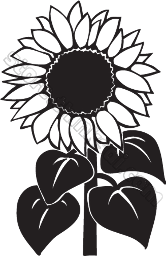 sun flower clipart black and white