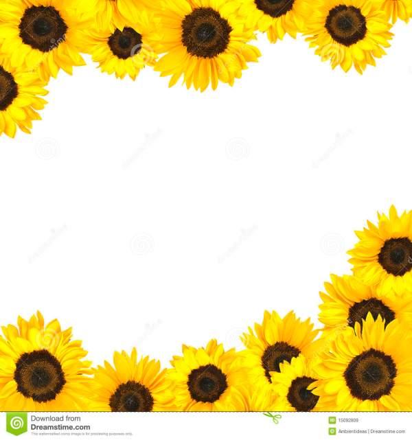 sunflower border clipart free