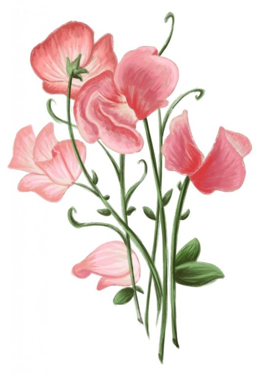 sweet pea clipart free