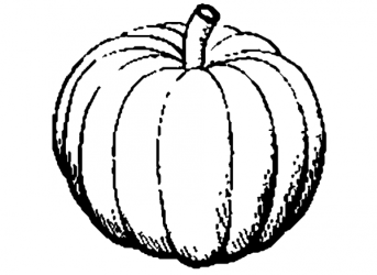 clip clipart pumpkin vegetable cliparts graphic nice plant clipartmag seed clipartion