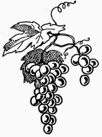 Wine Varieties List