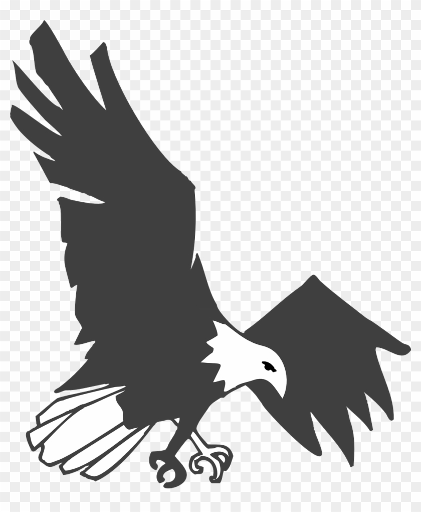 Burung Elang Vector : burung, elang, vector, Burung, Elang, Hitam, Putih, Transparent, Clipart, Images, Download