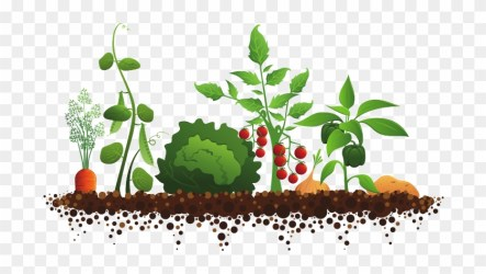 Plant Garden Clipart Vegetable Garden Illustration Free Transparent PNG Clipart Images Download