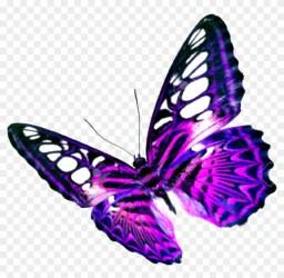 Clip Art Transparent Butterfly