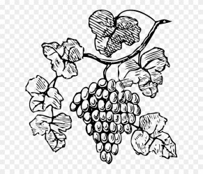 Food Wine Grapes Outline Drawing Tree Border Grapes Clipart Free Transparent PNG Clipart Images Download