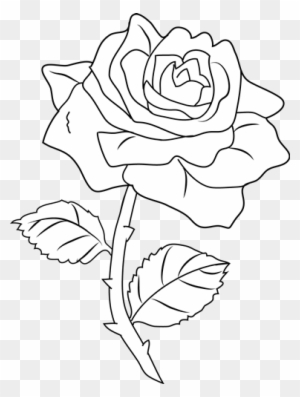 Rose Drawing Png : drawing, Drawing, Transparent, Clipart, Images, Download, ClipartMax