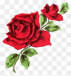 Drawn Rose Transparent White And Red Aesthetic Header Free Transparent PNG Clipart Images Download