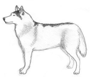 pencil dog sketches sketch drawing simple dogs drawings husky siberian paintingvalley ridgeback clipartqueen