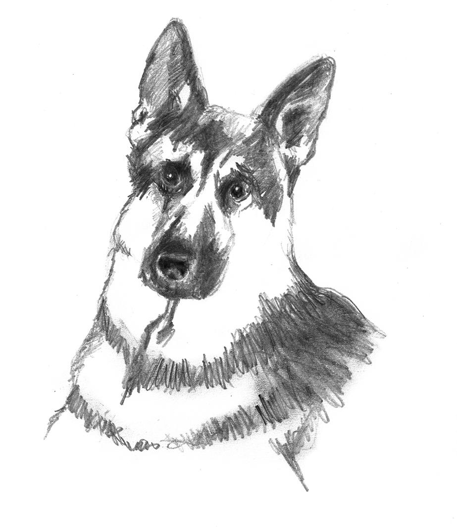 Easy Ways To Draw A Dog Head How To Draw A Dog Head Djdareve