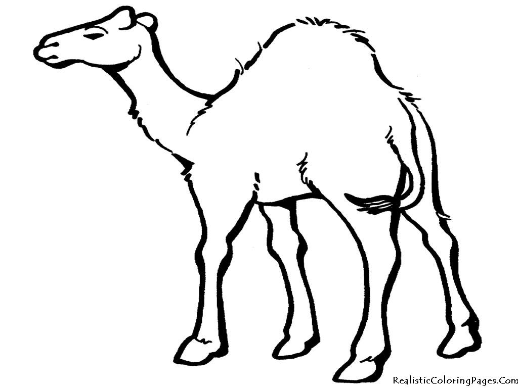 Cartoon Desert Animals