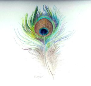 peacock feather drawing deviantart colorful pencil tattoo drawings simple cliparts pencils clipart watercolor cool colored clip drawn colors library
