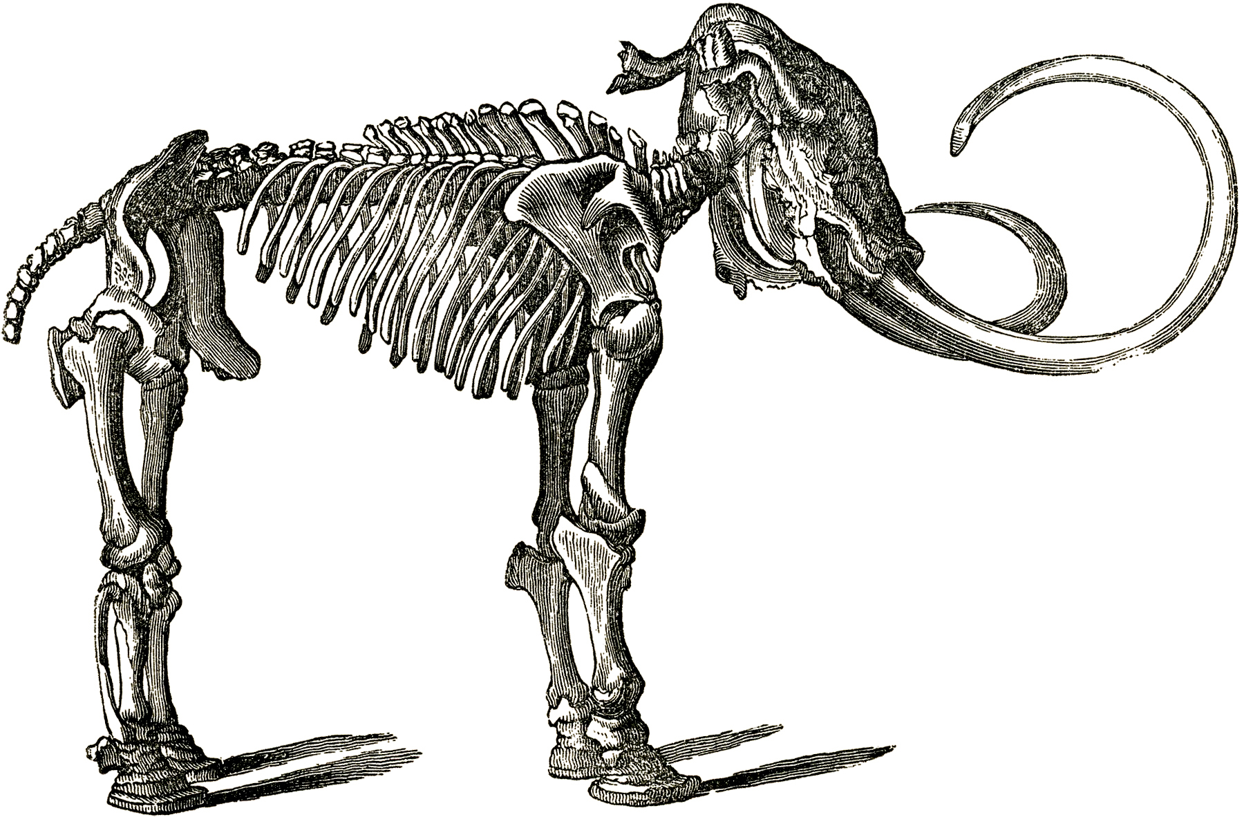 Dinosaur Graphics