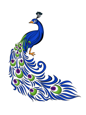 peacock simple drawing colorful clipart cliparts feather drawings clip border peacocks attribution forget link don