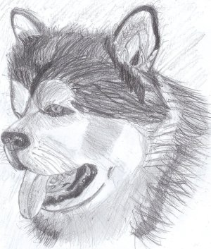 drawing realistic easy dog puppy drawings draw cliparts clipart library favorites clip