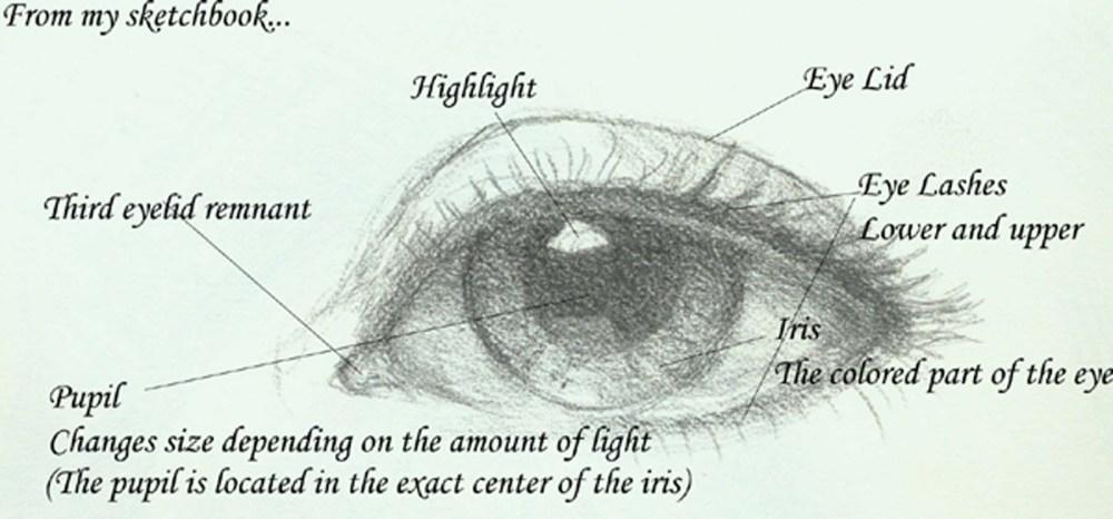 medium resolution of eye diagram jeannie vodden art