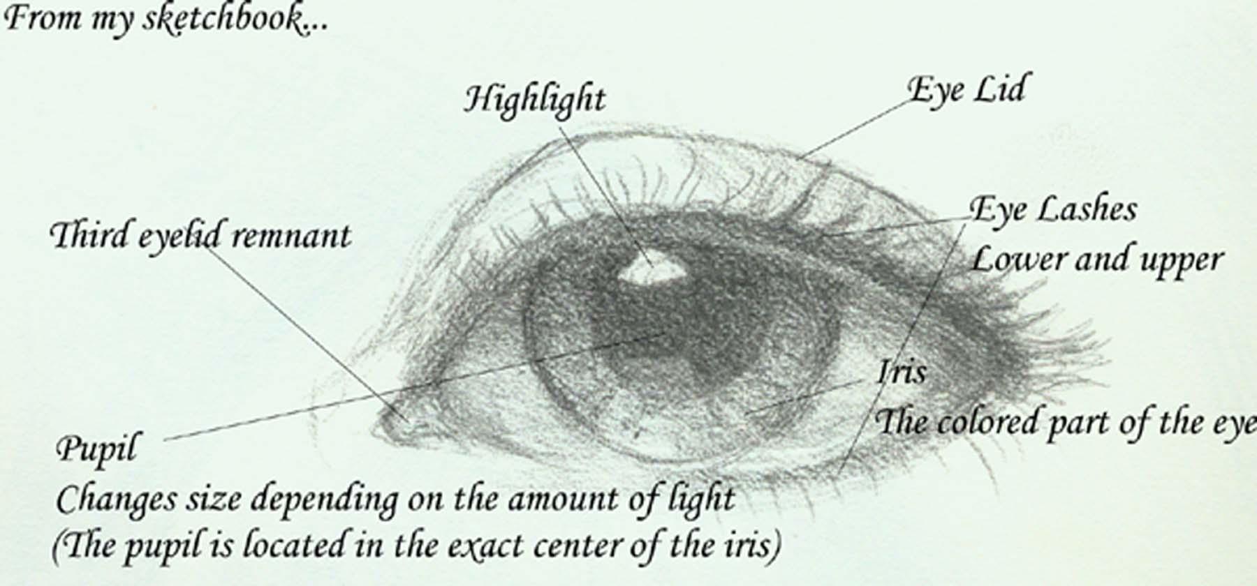 hight resolution of eye diagram jeannie vodden art