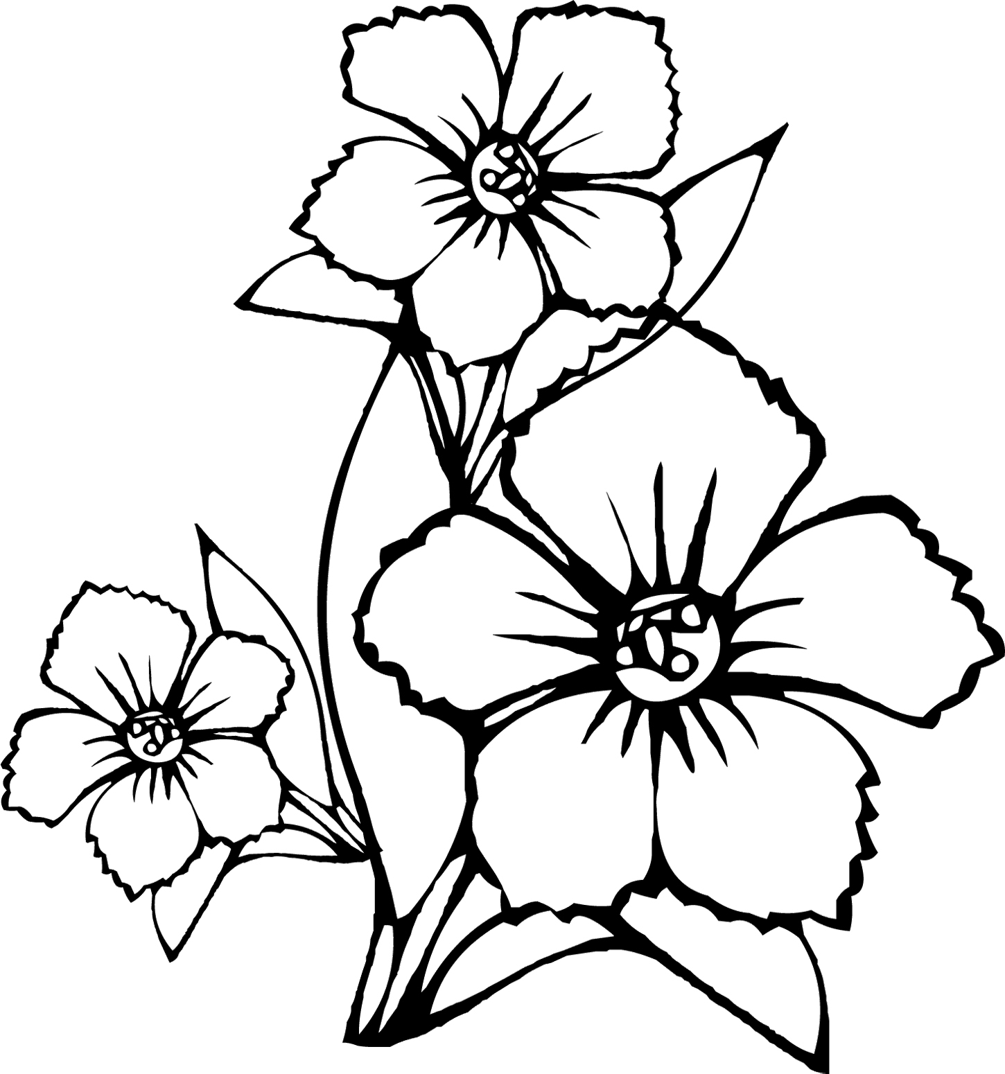 Tropical Flower Drawings