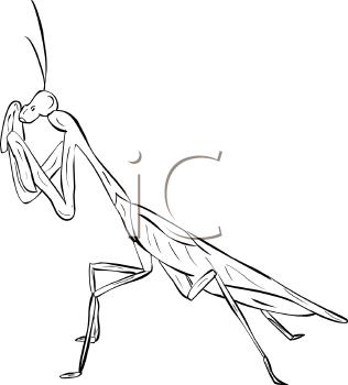 praying mantis clipart black