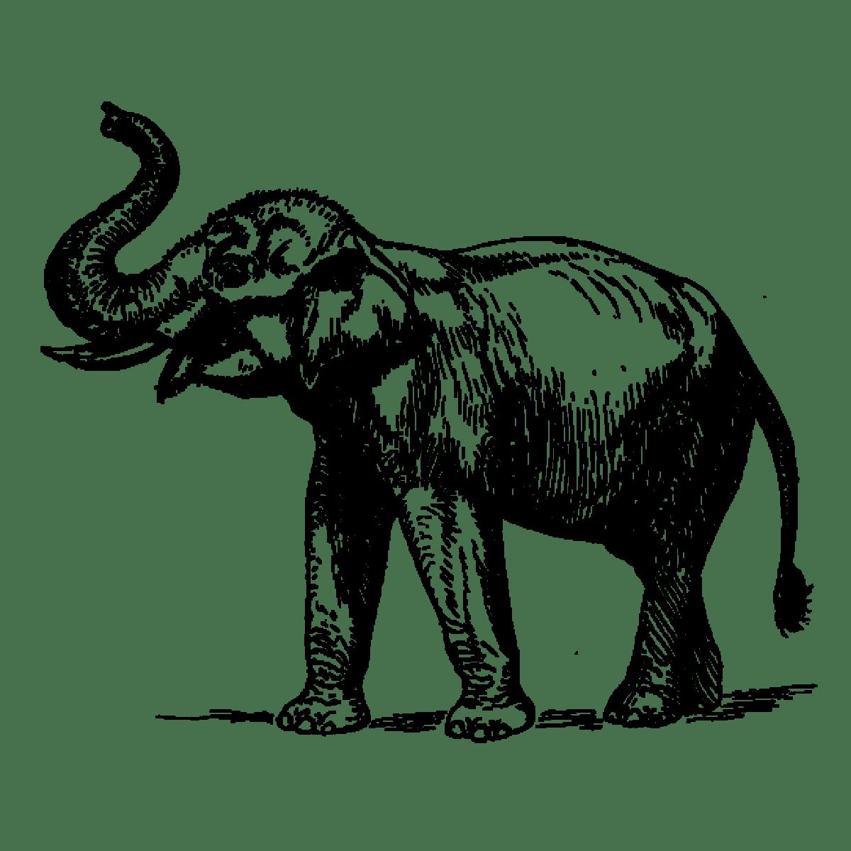 Elephant Graphic
