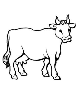 cow drawings cliparts drawing simple cows coloring clipart pages attribution forget link don colour