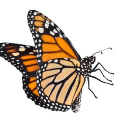 monarch butterfly clipart [ 2832 x 2528 Pixel ]
