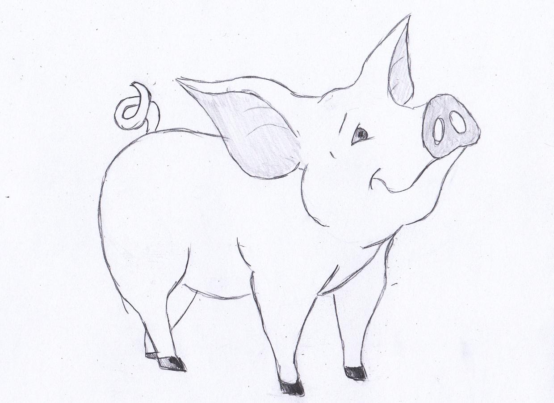 Pig Drawing