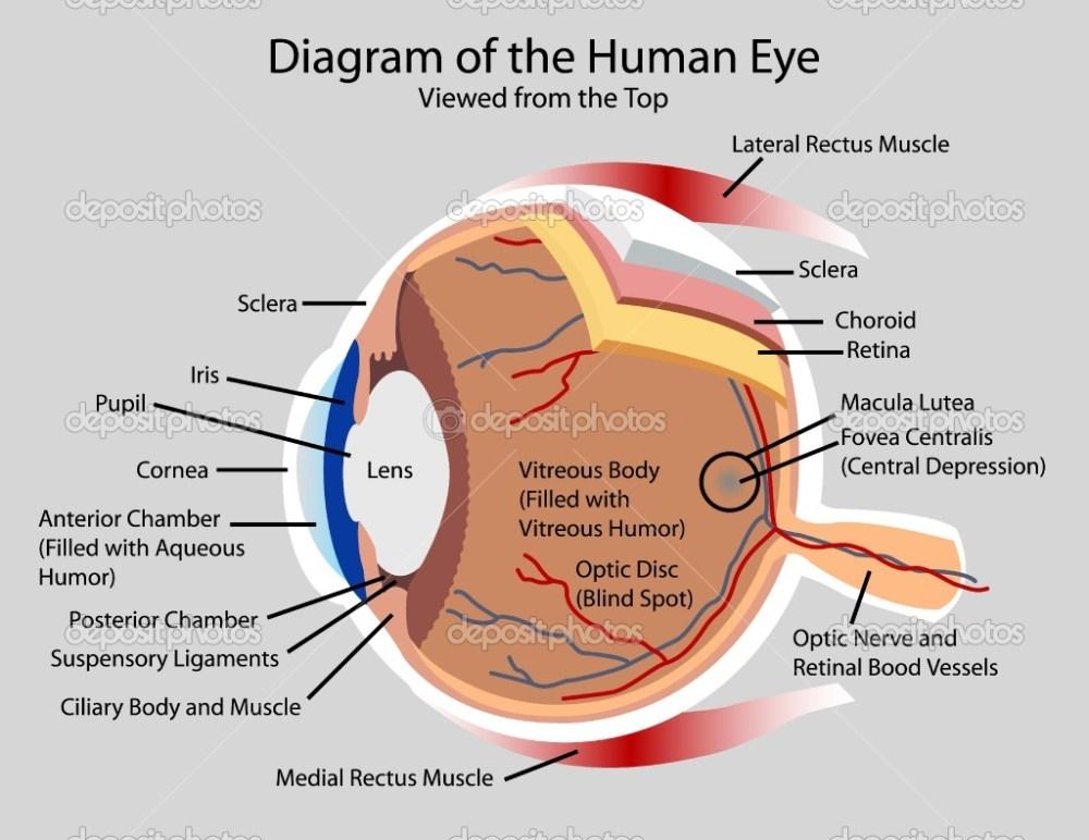 medium resolution of eye diagram viralnova