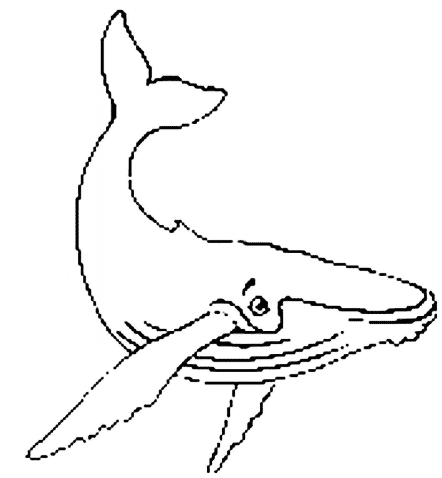 Humpback Whale Cartoon