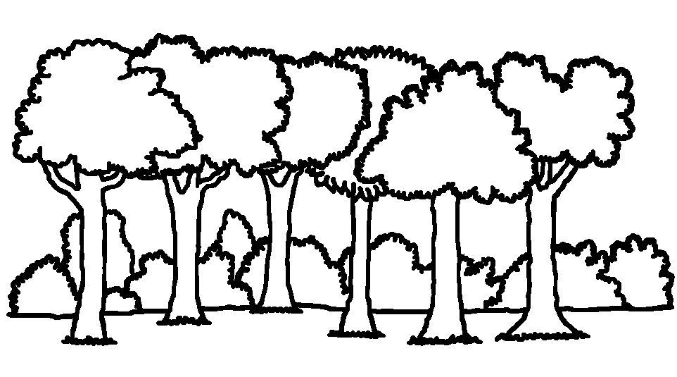 Path Coloring Page Images Of Forest Background