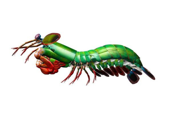 praying mantis clip art