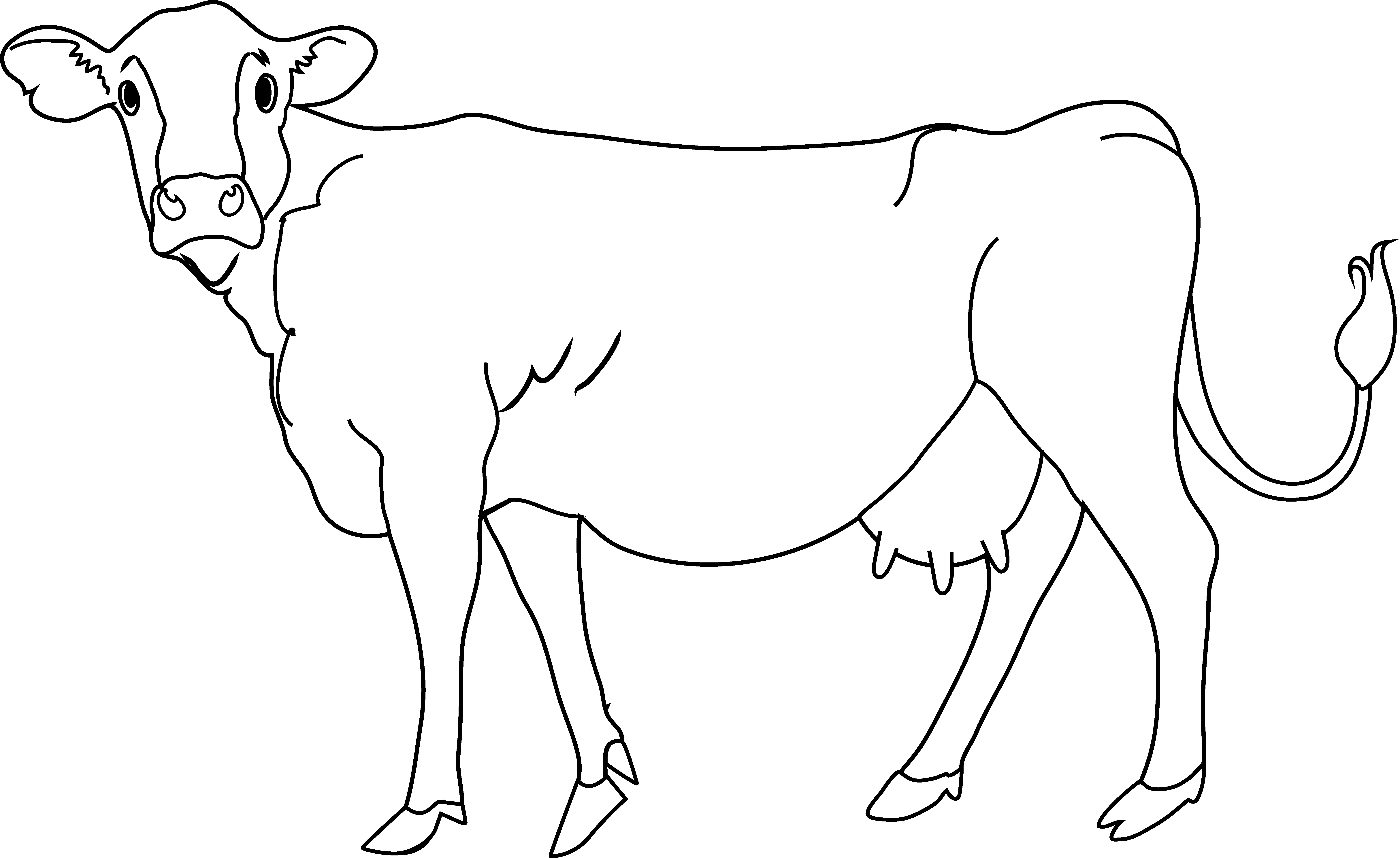 White Cow Pictures